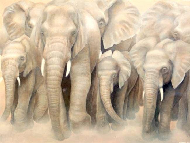 152_674_elephant1