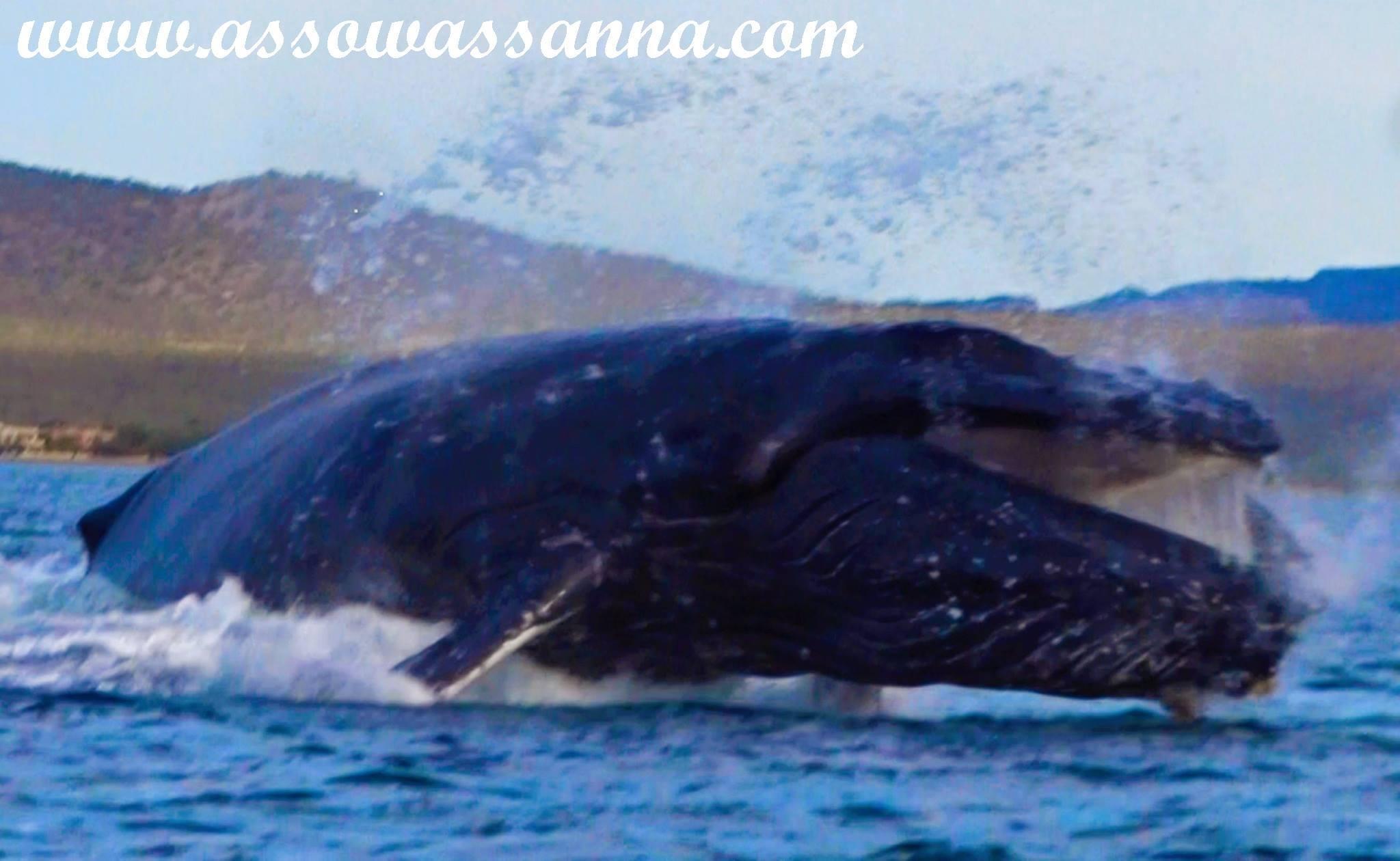 baleine 5