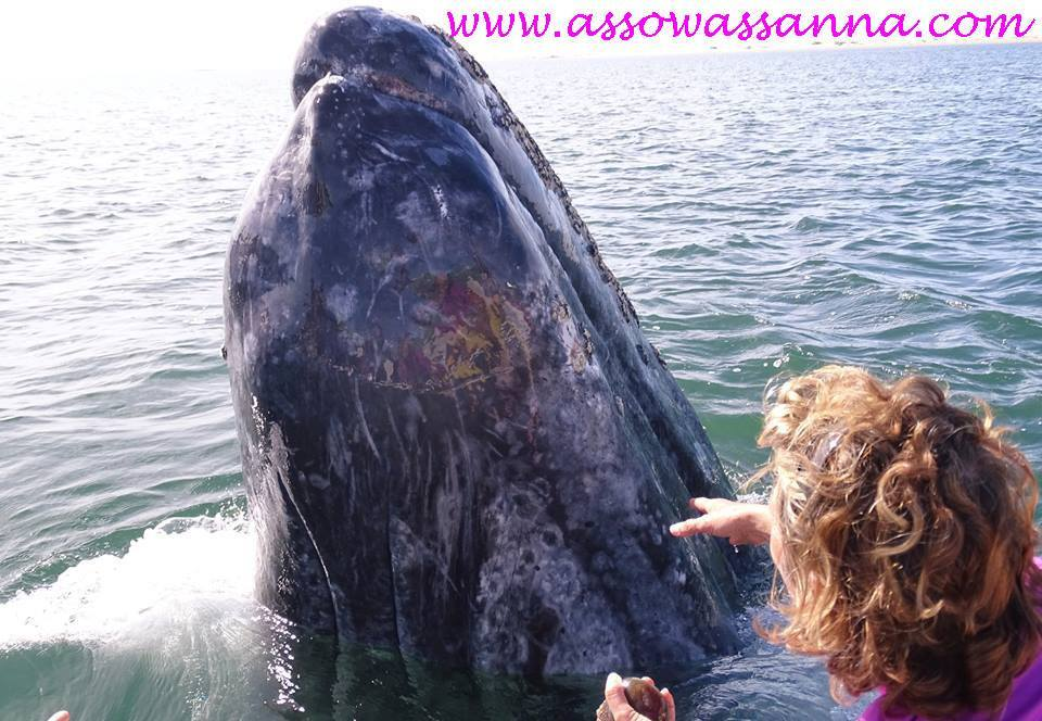 baleine ammiga