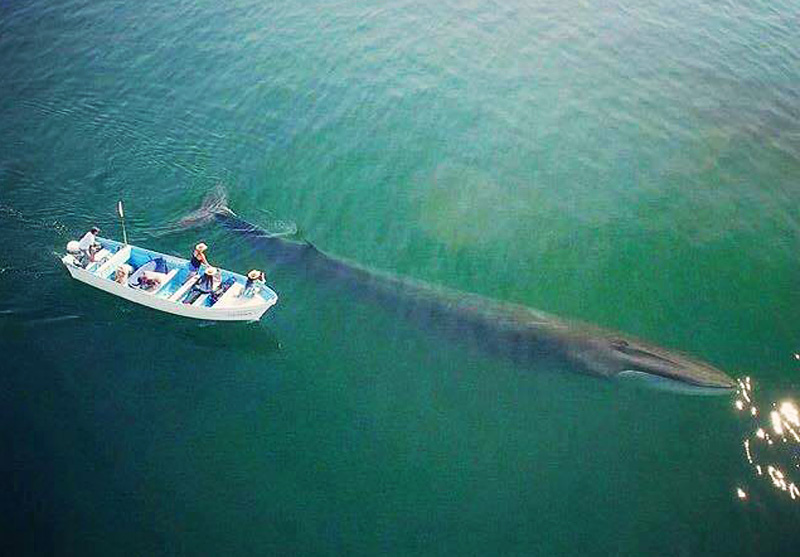 baleine bleue avec barque