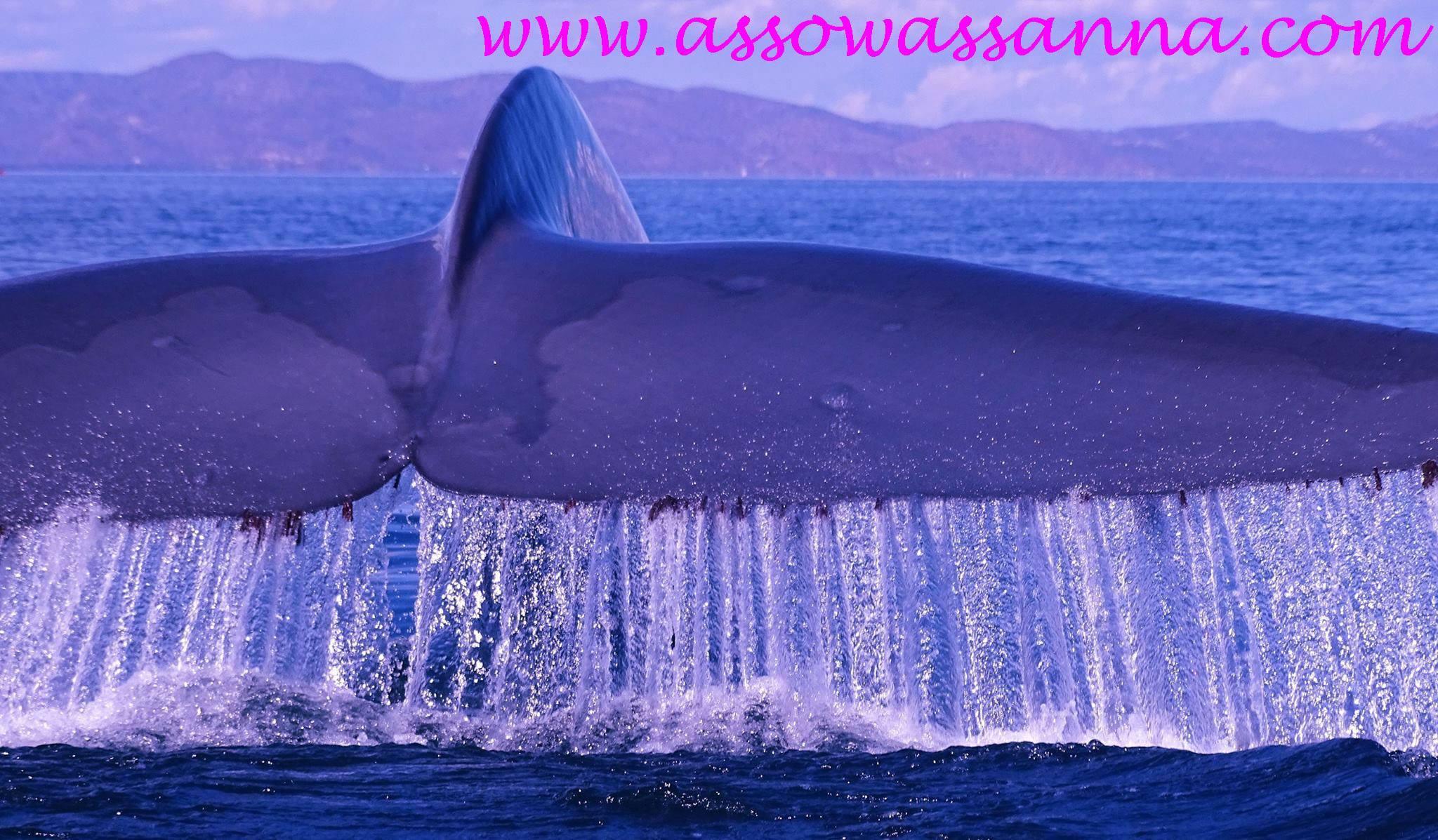 baleine bleue queue