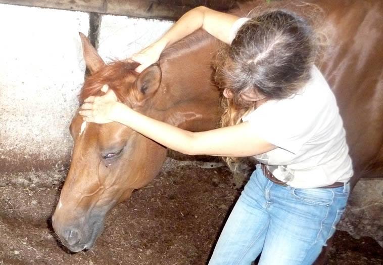 cheval mordeur