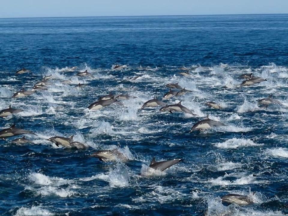 dauphin groupe