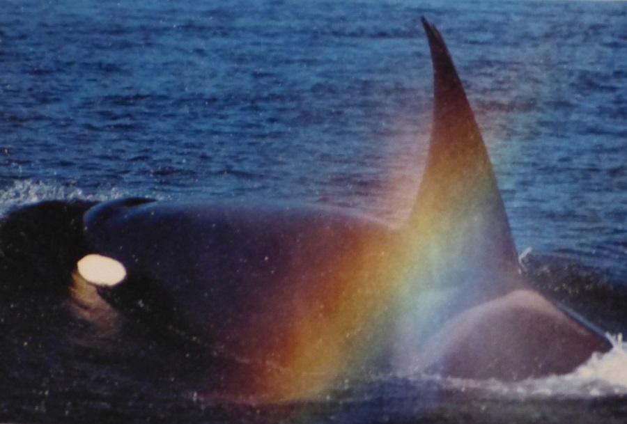 rencontre avec les orques