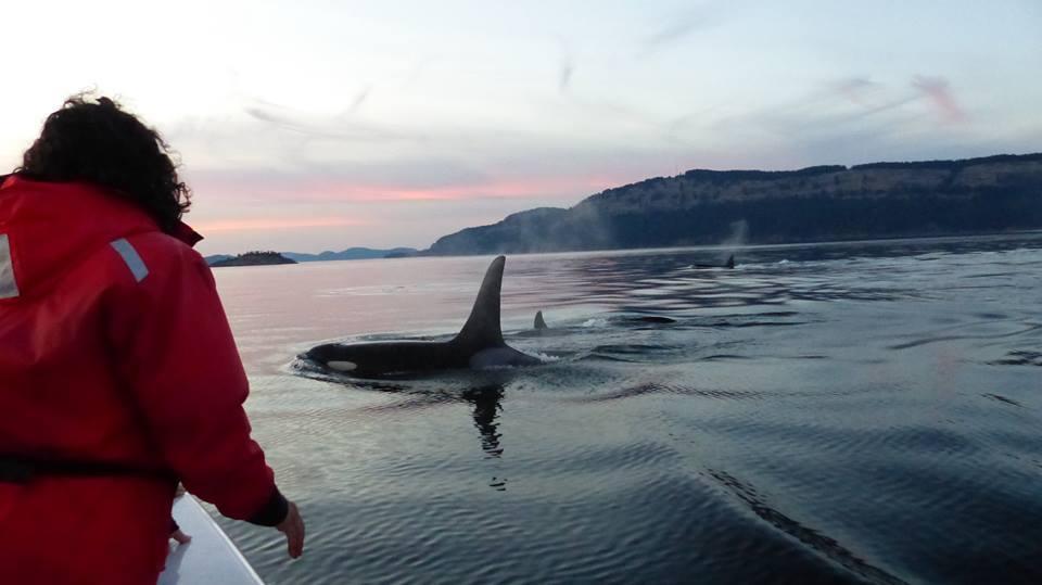 orque bateau 2