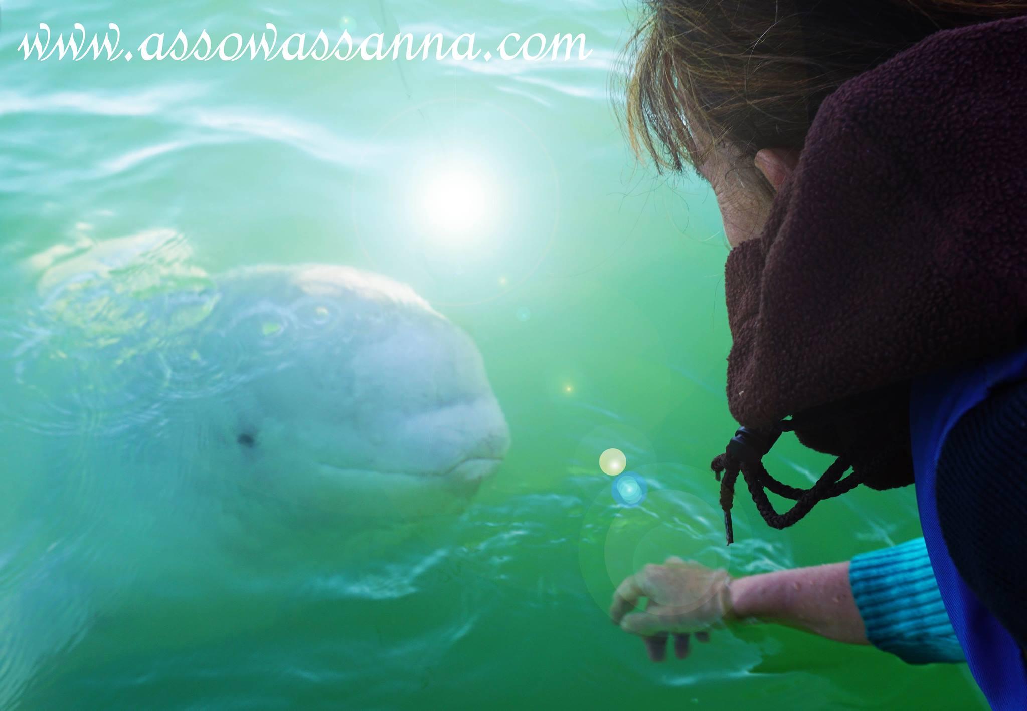 beluga connection