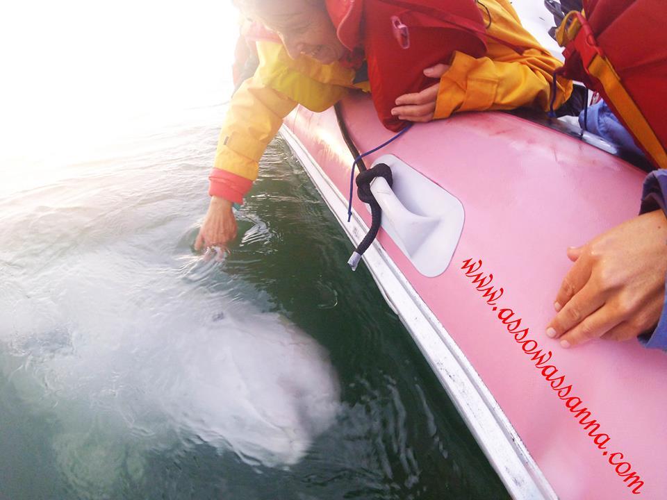 beluga interaction