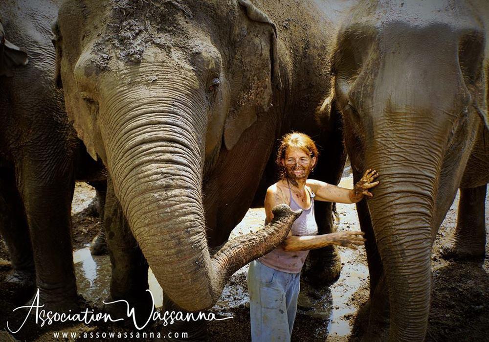 Elephant Terre Happy