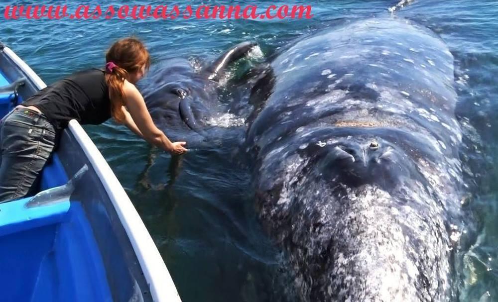 Recevoir les enseignements des baleines.